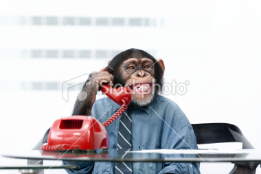 stock-photo-18566495-male-chimpanzee-in-business-clothes